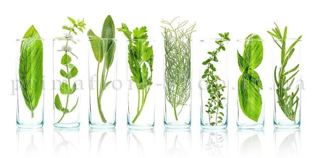 Жидкие растительные экстракты