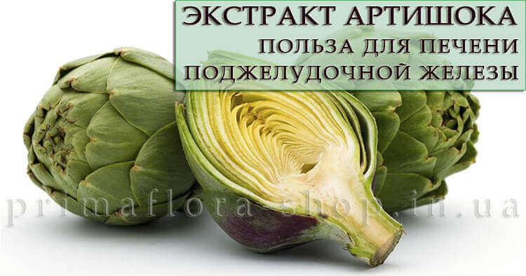 Экстракт артишока: полезные свойства для печени и поджелудочной железы